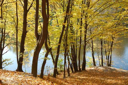 riverside trees: Autumn trees on the riverside