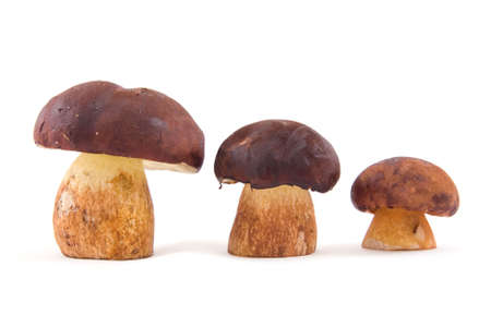 Three mushrooms placed on growth isolated on a white background Stock Photo