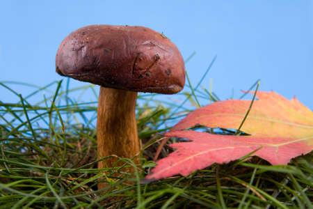 Beautiful mushroom in a grass on a background blue sky photo