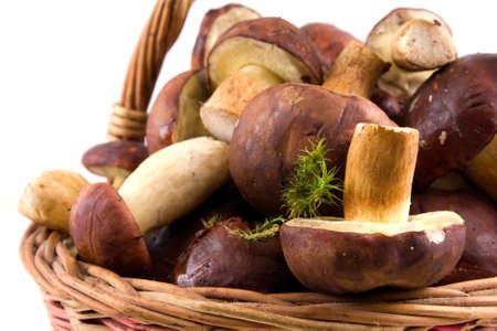 mushrooming:  basket  mushrooms  isolated on a white background Stock Photo