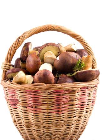 basket full  mushrooms  isolated on a white background photo
