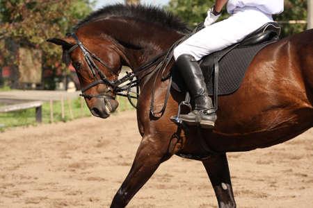 human leg on the horseback Foto de archivo