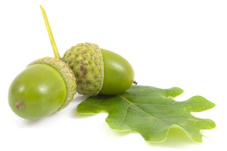 Acorn with an oak leaf on isolated Foto de archivo