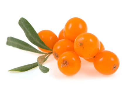 sea buckthorn  isolated on the white photo