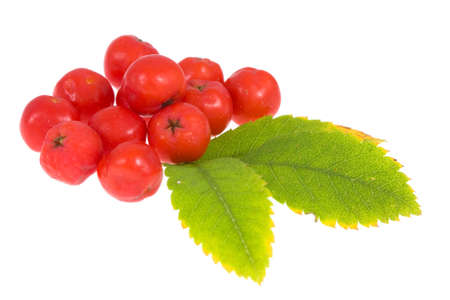 rowan berry and leaf isolated on white