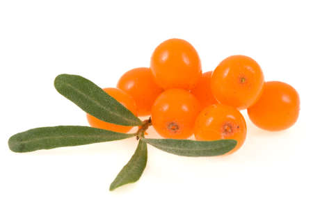 sea buckthorn isolated on the white  Foto de archivo