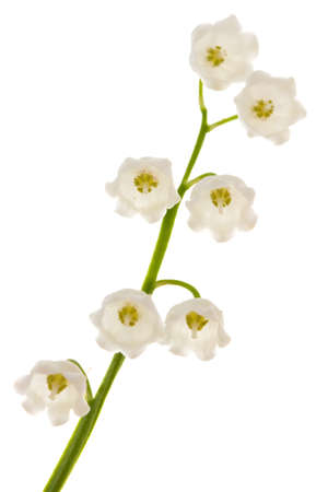 Lily of the valley isolated on