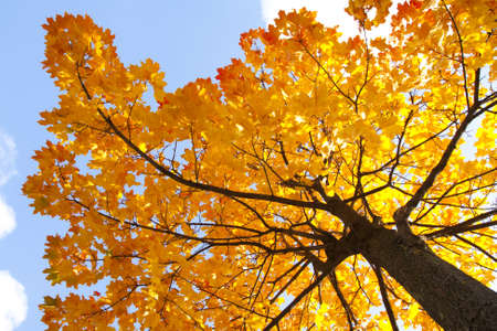 Branch of beautiful autumn maple leaves Stock Photo - 7604816