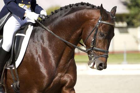 Dressur-Pferd und Reiter  Standard-Bild