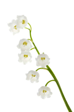Lily of the valley isolated on white  Image  photo