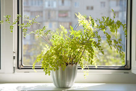plant pot: Window with flowerpot