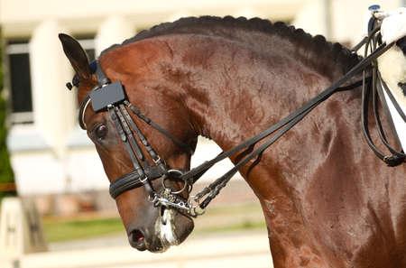 bridle:  beautiful dressage horse