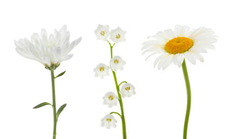 White flowers collection   chrysanthemum,chamomile,Lily of the valley  on isolated Stock Photo - 12383918