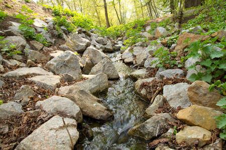 murmur: Mountain stream in forest
