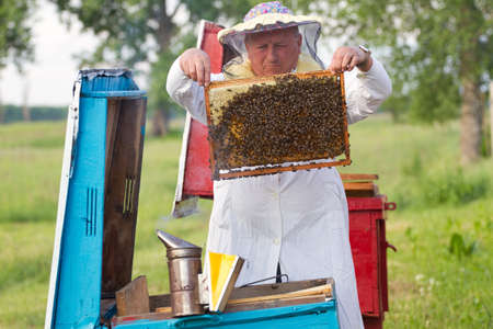 Beekeeper with honeycombs working in apiary  photo