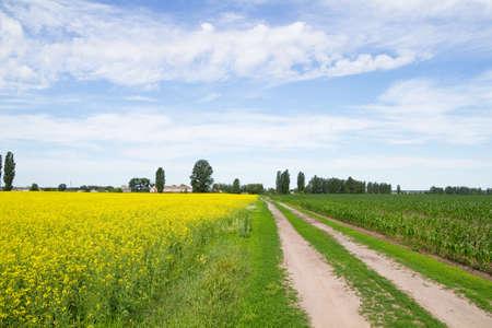 Road through flowering canola  fields photo
