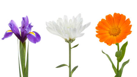 Flowers collection yellow iris, chrysanthemum and calendula on isolated Stock Photo - 16568895