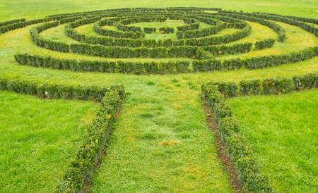labyrinth: Green bushes Labyrinth  Stock Photo
