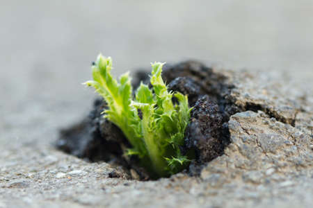 Green plant growing trough cracked asphalt photo