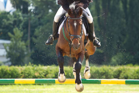 Horse jump a hurdle in competition photo