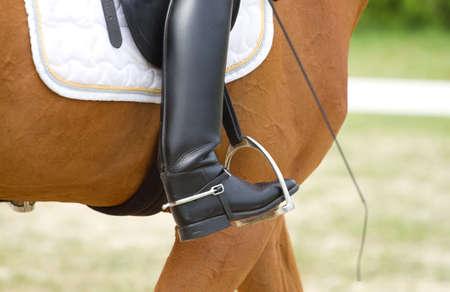 Dressage horse and human leg Stok Fotoğraf