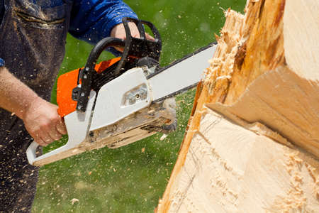 forestry industry: Man with chainsaw cutting the tree