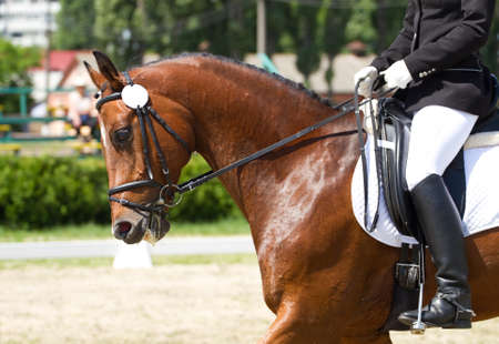 horse riding: Dressage horse and rider