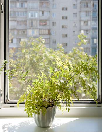 inward: Window with a flowerpot .