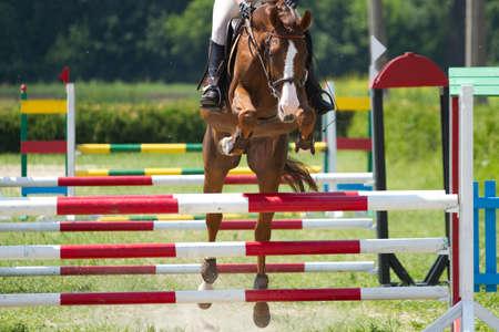 jumping fence: Caballo saltar un obst?culo en la competici?n