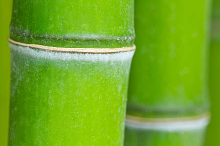 Bamboo green forest macro background Stock Photo - 26163822