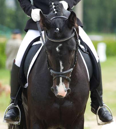 the rider: dressage cavallo e cavaliere Archivio Fotografico