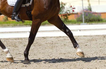 caballo jinete: Doma de caballos y un jinete