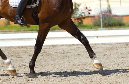 Dressage horse and a rider Stok Fotoğraf
