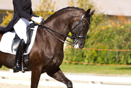 Dressage horse and a rider Stock Photo