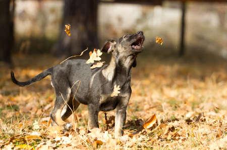 Happy puppy  in an autumn park