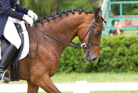 stirrup: Dressage horse and a rider Stock Photo