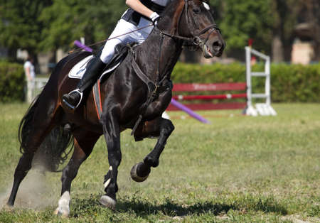 horse jump: Horse jump a hurdle in competition