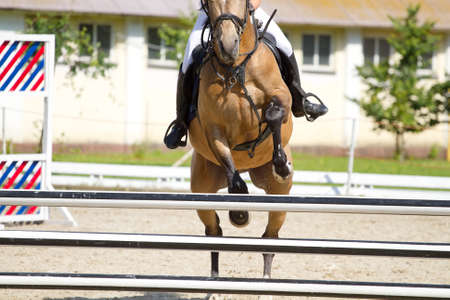 hurdle: Horse jump a hurdle in competition