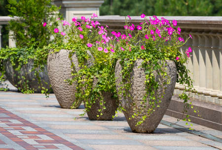 column: Blossom flowers in pots on the park