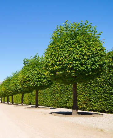 ornamental garden: Round shaped green trees on background in ornamental garden on a blue sky Stock Photo