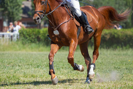 Dressage horse rider in the arena Stock Photo