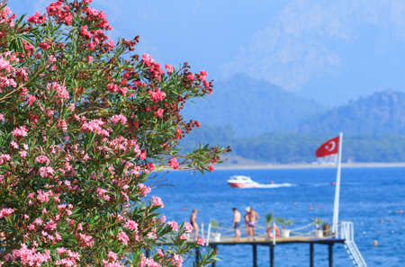 Oleander flowers on the sea and  Turkish flag in Kemer