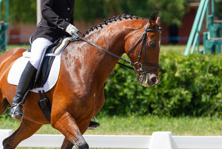 Dressage horse and rider in competitions Stok Fotoğraf