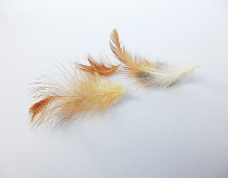 Brown feathers white background Stock Photo