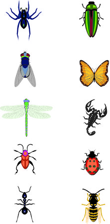 ant animal Illustration