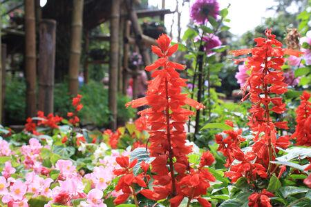 flower gargen