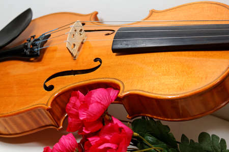 Fiddle and Flowers