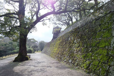 Arch tree at Kumamoto castle 新闻类图片
