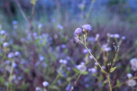 Tiny  purple flowers 免版税图像