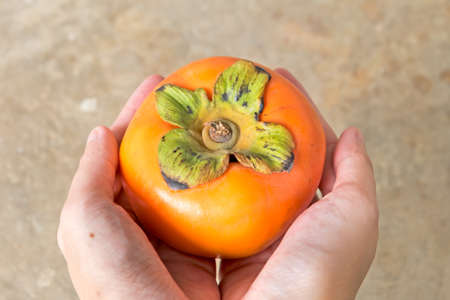 Hand holding fresh persimmon fruit